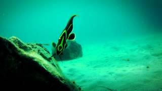 #4287, Buceando en arrecife pez negro y amarillo nadando muy cerca [Efectos], Buceo y mar