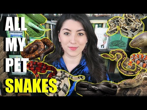 All My Snakes In ONE Video! Meet All My Snakes