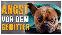 TGH 151 :  Angst vor Gewitter und Donner - Hundeschule Stadtfelle