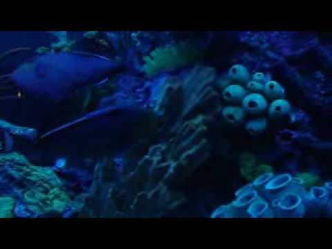 Aquarium Restaurant Kemah Tx Doovi