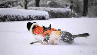 ボーダーコリー ciel&aile 「2012初雪遊び」.m2p.