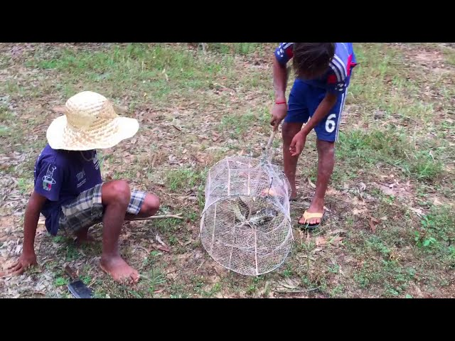 Amazing Boys Catching Big Snake Use Snake Trap - How to catch snake with hand and safe