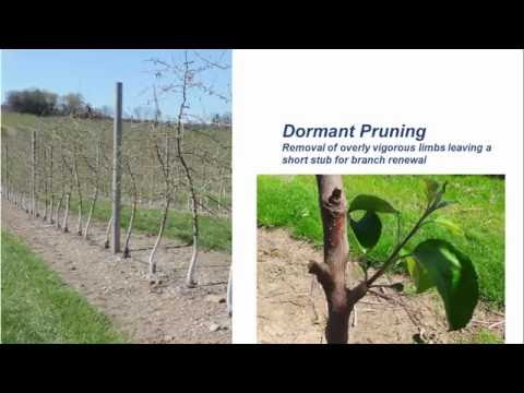 The Apple Orchard System Blueprint