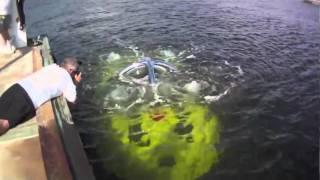 U-Boat Arrives