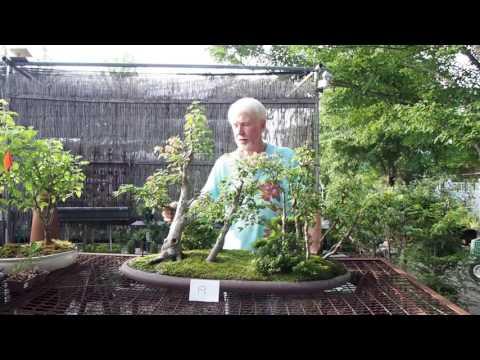 Plant City Bonsai - Summer 2016