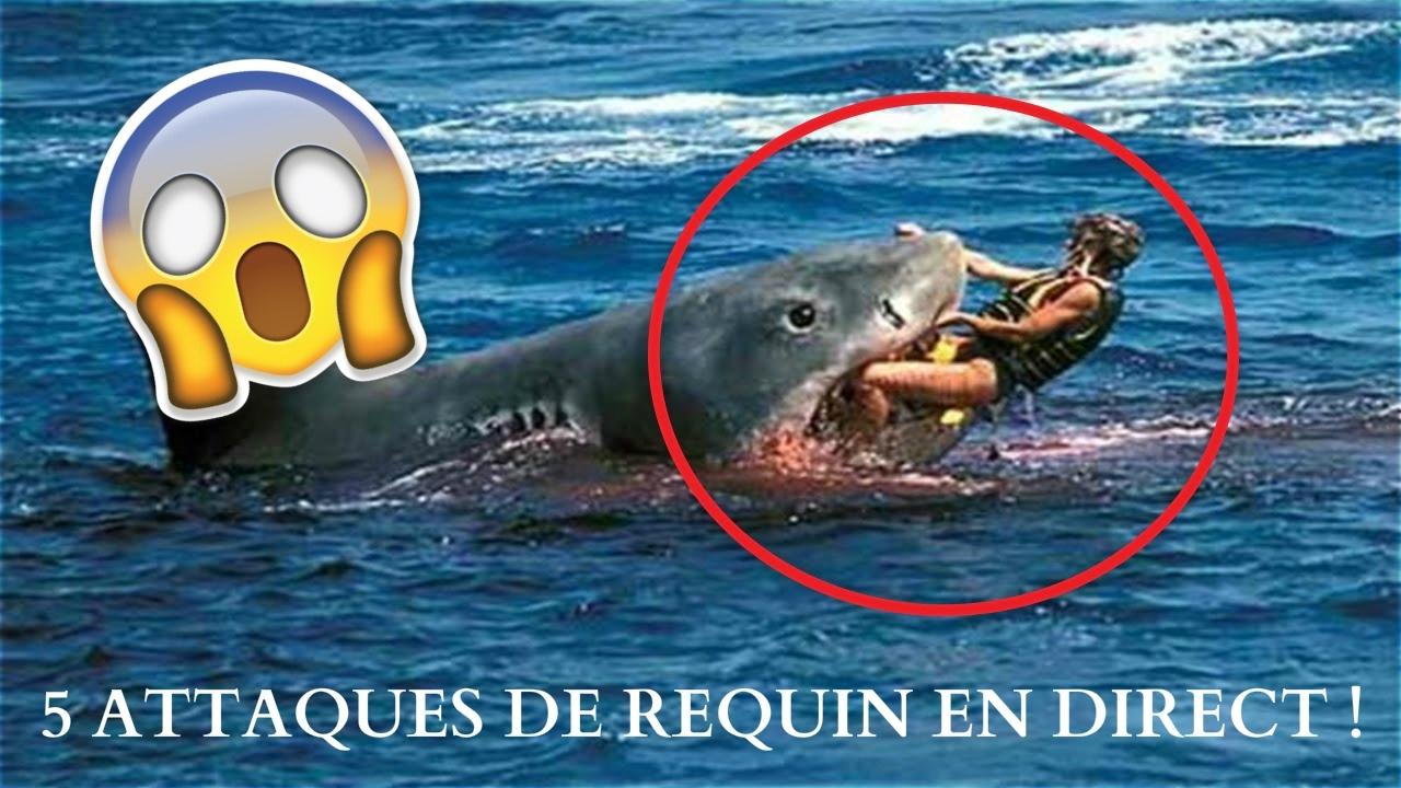5 attaques de requin en direct les plus choquantes youtube - Requin en dessin ...