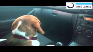 Спарки  включи музыку  Моя собака   DJ