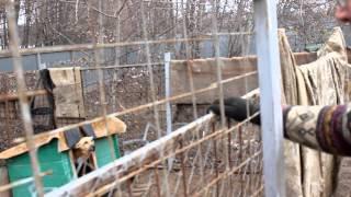 Воронежский приют для бездомных собак