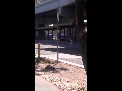 Richmond Ca  Bart Fight