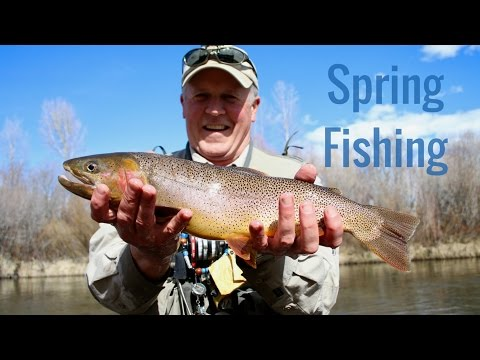 Spring Fishing - Snake River Cutthroat Trout