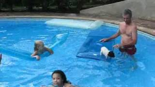 Micro pig swimming