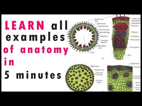 Biology Bytes SHORT TRICKS-Plant Anatomy NEET 2020|JIPMER|AIIMS