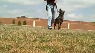 Rhett Unleashed - Redeeming Dogs - Dog Training