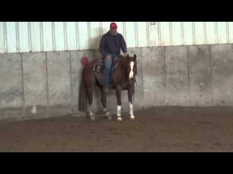 KIKI kids horse for sale from YouTube · High Definition · Duration:  3 minutes 46 seconds  · 569 views · uploaded on 27.01.2015 · uploaded by Abby Ashauer
