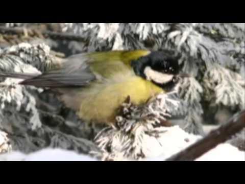 открытое занятие Зимующие птицы