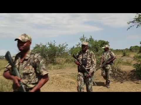 Protecting rhinos in the Wilderness - Help a Ranger Save a Rhino