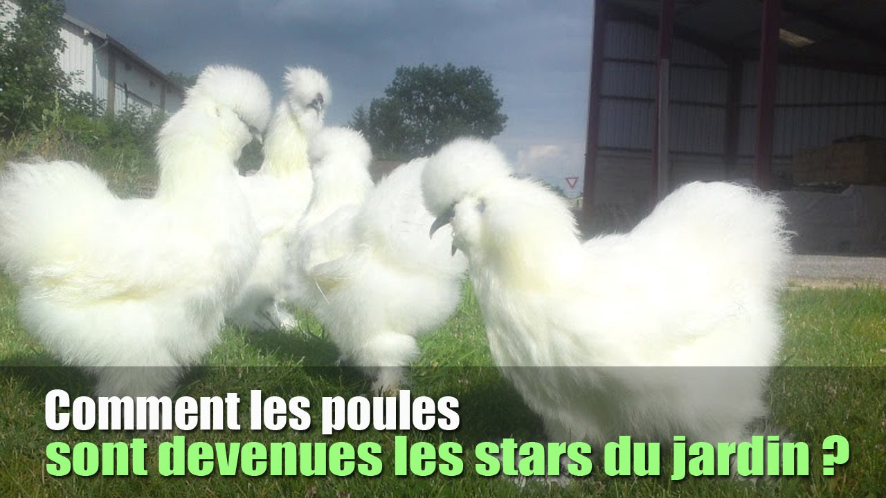 comment les poules sont devenues les stars du jardin youtube. Black Bedroom Furniture Sets. Home Design Ideas