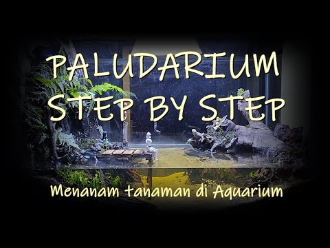 paludarium-step-by-step---menanam-tanaman-di-aquarium