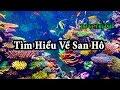 Tìm hiểu về san hô