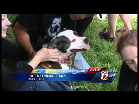 Celebrate Randolph County: Fort Pitbull Rescue finds foster, forever homes