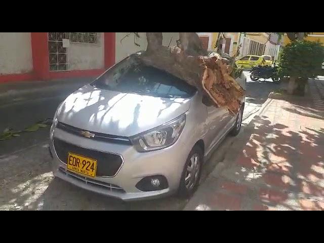 Más estragos de 'La Loca' en el Centro de Santa Marta