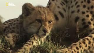Хищники Африки Убийцы