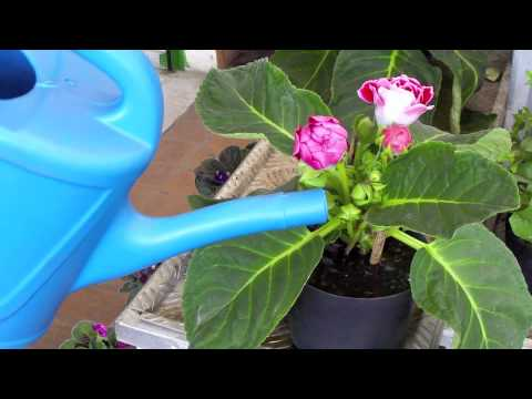 Como Regar Plantas Ornamentales Youtube