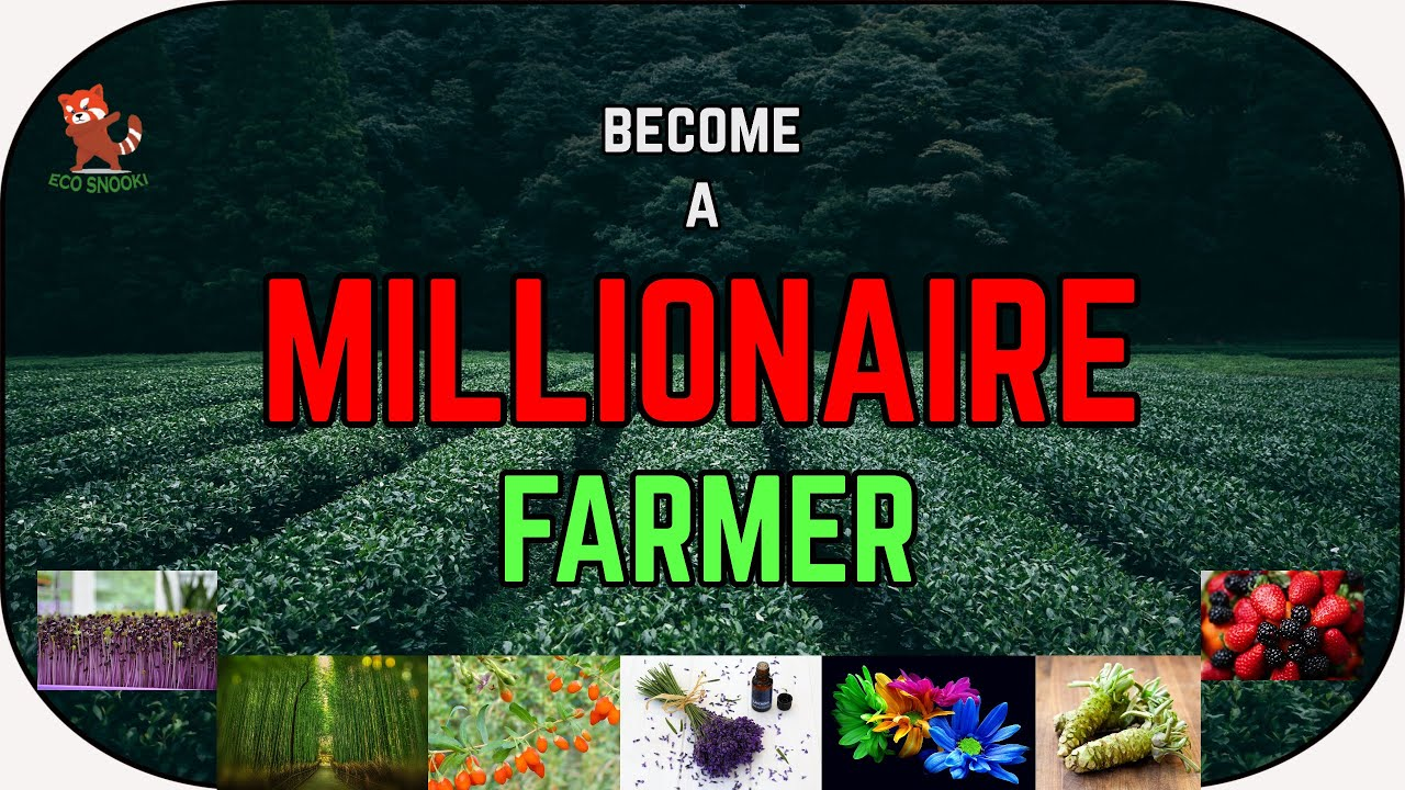 Top 10 high profit crops for you to become a MILLIONAIRE