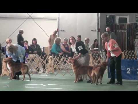2012 NSDTR US Specialty - Winners Dog
