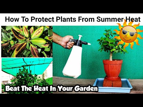 How To Protect Plants In Summer ~ 7 Tips To For Summer Gardening And Care ~ Save Dying Plant