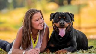 Bentley the Handsome Rottweiler | Ragamuffin Pet Photography