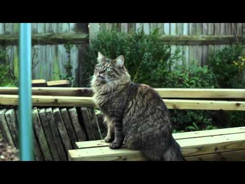 Calm your cat with Feliway