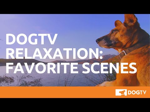 DirecTV adds DogTV channel for dogs to relieve the tedium of being a dog