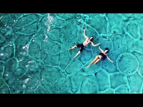 Gone Is Gone - Phantom Limb (Official Music Video)