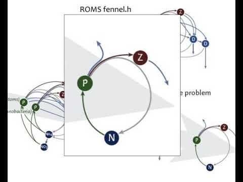 simple coupled physical biogeochemical models of marine ecosystems