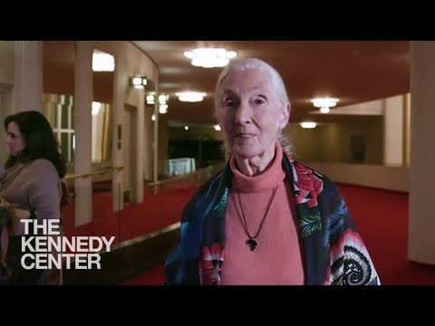 """Jane Goodall sees """"Me...Jane"""" for the first time!"""