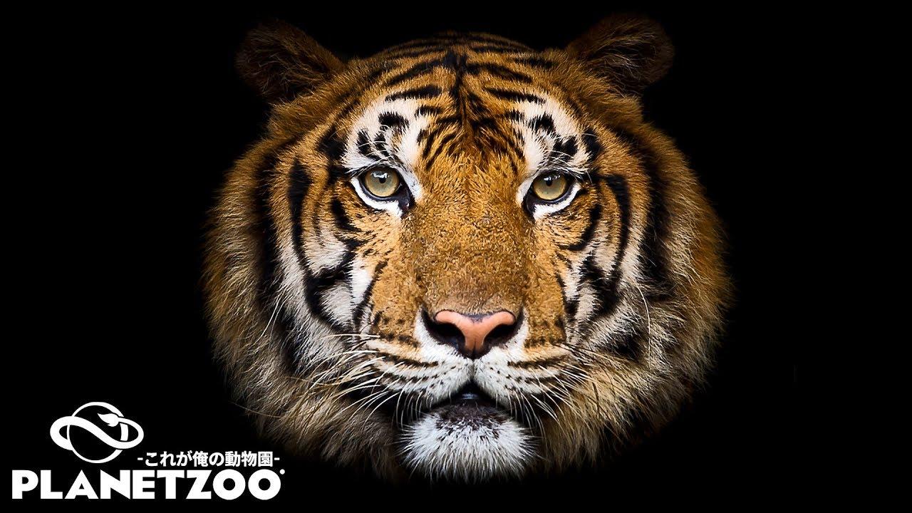これが俺の動物園だ【Planet Zoo】#1\