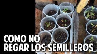 Como no regar los semilleros de tomate y otras respuestas - Cosas del Jardin Responde #1