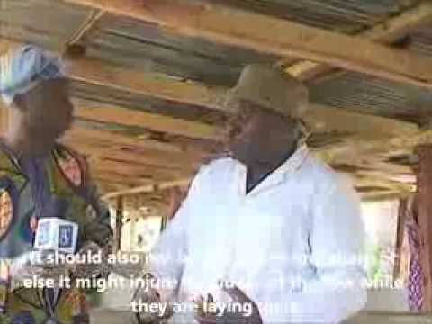 Tv Interview With A Pig Farmer In Nigeria 1 Pig Housing