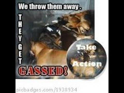 DOGS STILL Being GASSED To Death in U S  ANIMAL SHELTERS