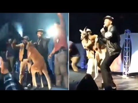 Mike Epps Faces Backlash After Bringing Live Kangaroo On Stage