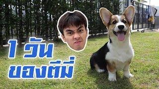 เล่นเกมกับหมา