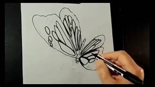 Drawing 3D Butterfly