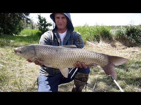 рыбалка в краснодарском крае карп амур
