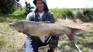 Рыбалка на Карпа и Амура водоем Замостье 2015