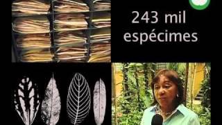 FAPEAM: Herbário do Inpa