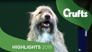 Kratu The Happy-Go-Lucky Rescue Dog Has A Mind Of His Own | Crufts 2019