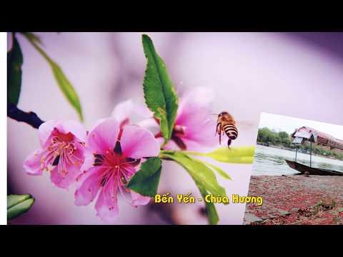 Việt Nam quê hương tôi (nhạc không lời)