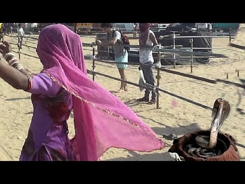 Indian Tribal Dance Of  Cobra Gypsy Girl - Pushkar Fair  - Rajasthan Tourism -INDIA
