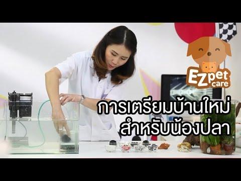 EZ pet care [by Mahidol] การเตรียมบ้านใหม่สำหรับน้องปลา